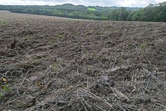 Muddy field of stubble after the harvest Royalty Free Stock Photo