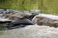 Muddy flood water destroying temporary sandbags flood protection wall covered with thick black nylon while flowing over it. On rainy spring day royalty free stock photography