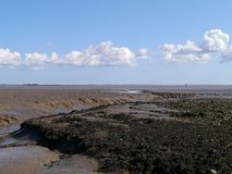 Muddy foreshore with seaweed Stock Images