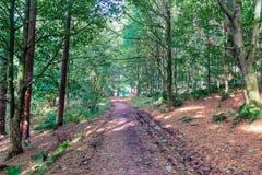 Muddy Forrest Footpath en los bosques hermosos de Crieff en Escocia Fotografía de archivo libre de regalías