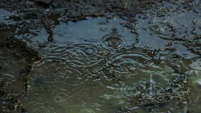Muddy ground puddle with raindrops.