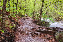 Muddy Hiking Trail Pennsylvania Stock Images