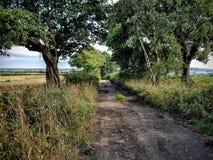 Muddy Lane y pistas fotografía de archivo