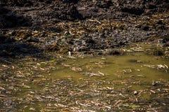 Muddy marshland. The surface of the muddy marshland royalty free stock image
