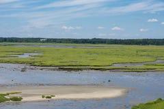 Muddy Patches i våtmarkerna Royaltyfri Foto