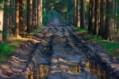 Muddy path Royalty Free Stock Image