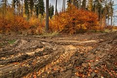 A muddy path in colorful autumn forest Stock Photography
