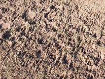Muddy path floor country agriculture texture foot prints. Essex; england; uk Stock Images