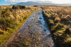 Muddy path in a moor in rural Scotland Royalty Free Stock Images