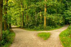 Muddy Path Parting Into Two At Haagse Bos, Forest In The Hague Royalty Free Stock Images