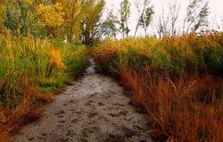 Muddy path royalty free stock photo