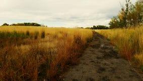 Muddy path stock photo