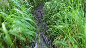 Muddy path with wooden chunks stock video footage