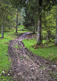Muddy path in woods Stock Photography