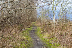 A muddy pathway Royalty Free Stock Images