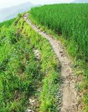 Muddy pathway in Terraced field Royalty Free Stock Photography