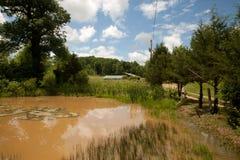 Muddy Pond Royalty Free Stock Photos