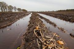 Muddy potato field Stock Image