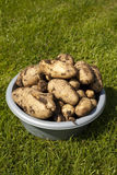 Muddy Potatoes Royalty Free Stock Images