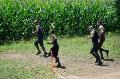 Muddy racers. A group of muddy men run into a corn field which is part of the course on the 2012 mudathlon Royalty Free Stock Photo