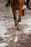 Muddy riding ground. Pony riding in the mud Royalty Free Stock Photos