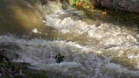 Muddy River en inondation après la pluie torrentielle, inondant par la pluie, courant inondé banque de vidéos