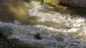 Muddy River in Flood after Torrential Rain, Flooding by Rain, Flooded Stream stock video