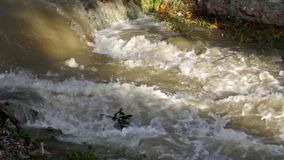 Muddy River in Flood after Torrential Rain, Flooding by Rain, Flooded Stream stock footage