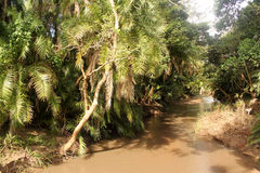 Muddy River Running Through Tropical-Wald Lizenzfreies Stockfoto