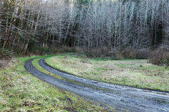 Muddy road. Concept image of a bend in a muddy road leading into a forest Stock Photography