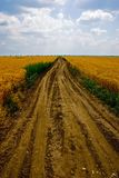 Muddy road. Muddy roud in a field Stock Photos