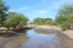 Muddy road in the African Bushveld. Wet and muddy road in the African Bushveld. Gravel road with greenery and bushes Royalty Free Stock Photos