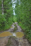 Muddy road in birch grove Royalty Free Stock Image