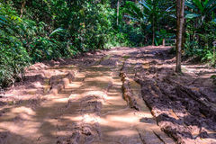 Muddy road in rain forest Royalty Free Stock Images