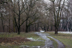 Muddy road in the winter forest Stock Images