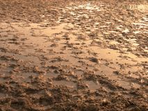 Muddy field with puddles and traces of ungulates. Muddy and sandy field with puddles and traces of ungulates, dirty ground, Brown wet environment royalty free stock images