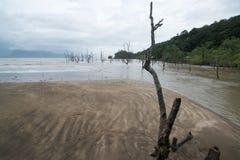 Muddy sea beach. On the way to Bako National Park - Borneo , Sarawak Malaysia royalty free stock photo