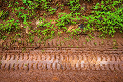 Muddy tire track on the grass way Royalty Free Stock Images