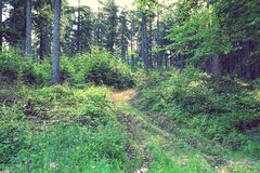 Muddy traces on the forest road Royalty Free Stock Photography