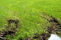 Muddy Tracks. Muddy tire tracks in the green grass Royalty Free Stock Photo