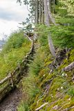 Muddy uphill hike in Alaska royalty free stock image