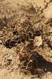 Muddy water close up. A close up of muddy water droplets Stock Image