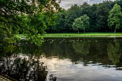 A muddy water pond at Haagse Bos, forest in The Hague Royalty Free Stock Photos