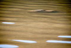 Muddy waters Stock Photos