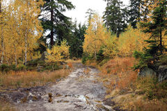 Muddy way in the autumn forest. Royalty Free Stock Photos