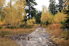 Muddy way in the autumn forest. Stock Photography