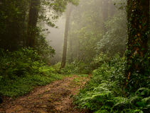 Muddy way within foggy forest Royalty Free Stock Image
