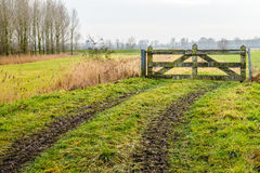 Muddy wheel tracks to a closed gate Royalty Free Stock Images