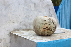 Muddy white pumpkin. A dirty natural white Lumina pumpkin, freshly harvested from the garden, on a old concrete wall in countryside stock image