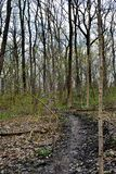 A muddy Wisconsin Forest Path. A long uphill trek through the mud will be needed to get you to the top of this hill in the Wisconsin forest late in the afternoon royalty free stock photography